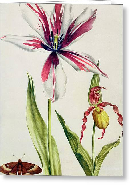 Orchid, Tulip And Butterfly Greeting Card by Nicolas Robert