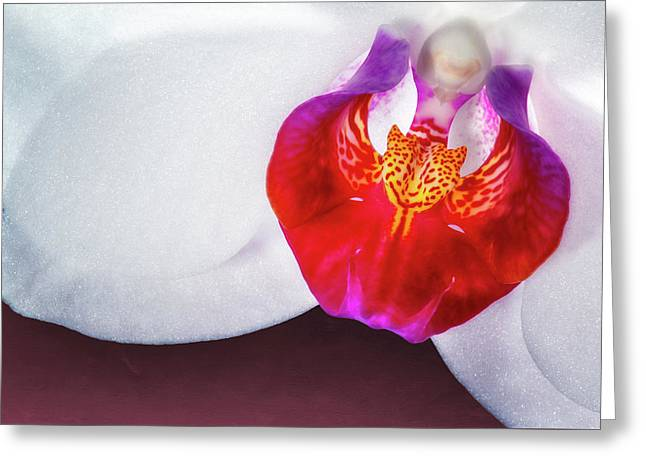 Orchid Up Close Greeting Card