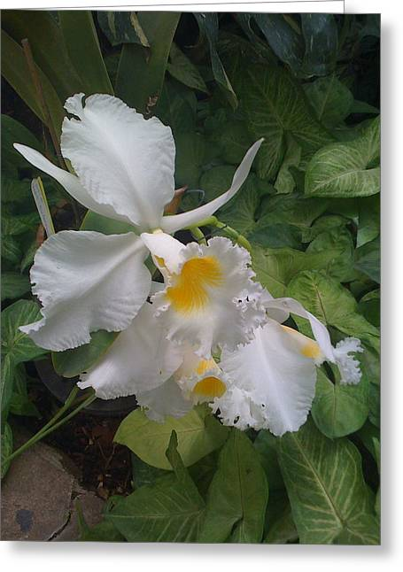 Greeting Card featuring the photograph orchid VIII by Fanny Diaz