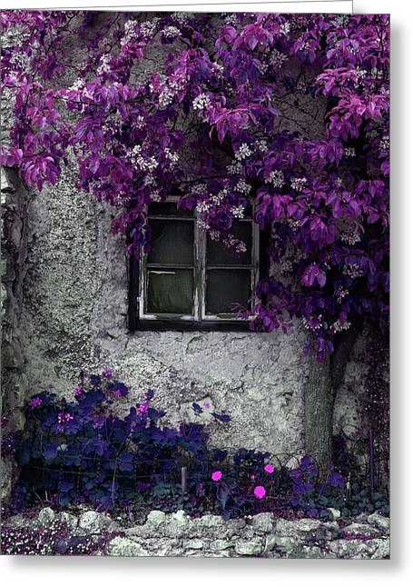 Orchid Vines Window And Gray Stone Greeting Card