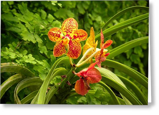 Greeting Card featuring the photograph orchid XXXI by Fanny Diaz