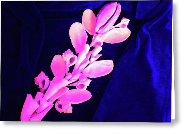 Orchidaceae Shell Greeting Card by Arlin Jules
