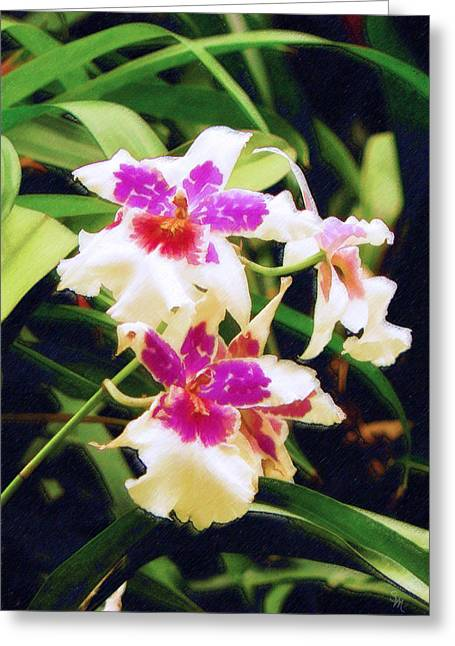 Greeting Card featuring the painting Orchids 1 by Sandy MacGowan