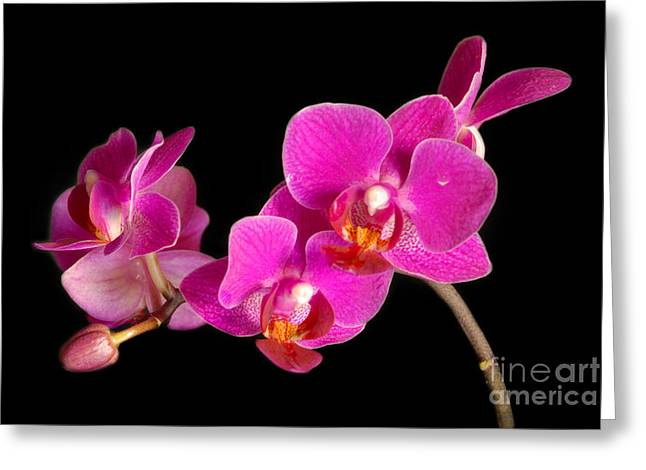 Greeting Card featuring the photograph Orchids by Alana Ranney