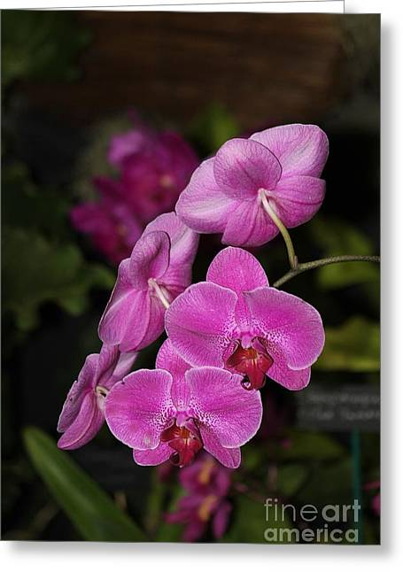 Orchids Alicia Greeting Card