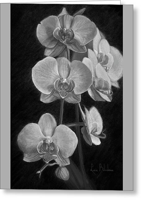 Orchids - Black And White Greeting Card by Lucie Bilodeau