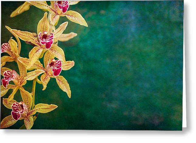 Orchids Greeting Card by Elena E Giorgi
