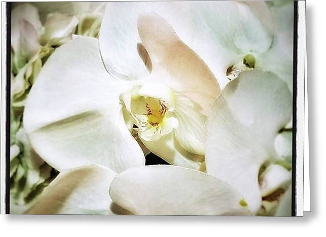 Greeting Card featuring the photograph Orchids For His Majesty. In Loving by Mr Photojimsf