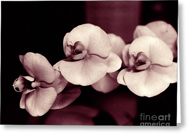 Greeting Card featuring the photograph Orchids Hawaii by Mukta Gupta