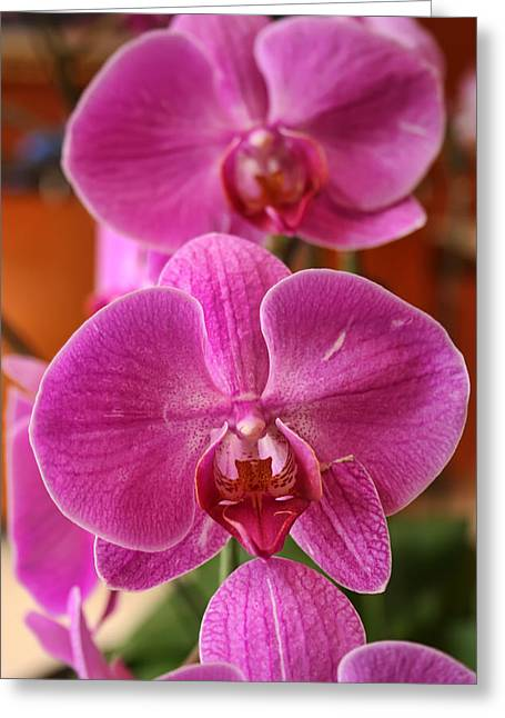 Orchids In Bloom Greeting Card by Alexander Mendoza