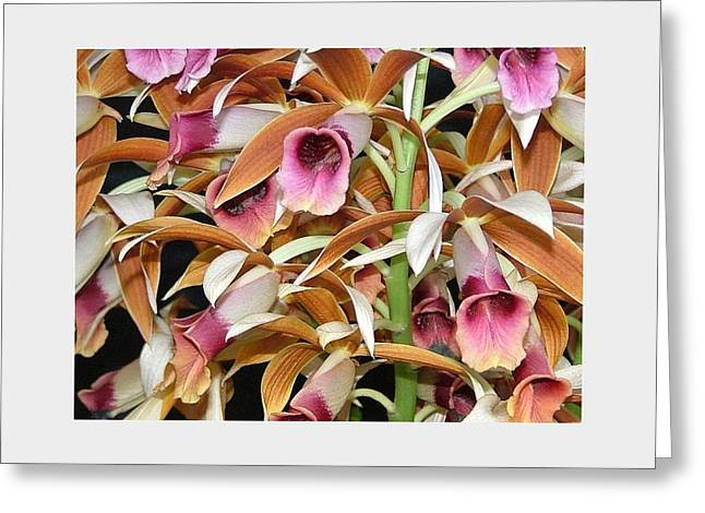 Orchids In Bloom Greeting Card by Mindy Newman