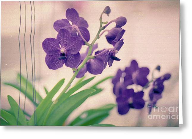 Greeting Card featuring the photograph Orchids In Purple  by Ana V Ramirez