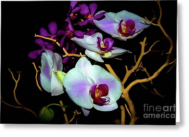 Greeting Card featuring the photograph Orchids In Water Color by Diana Mary Sharpton