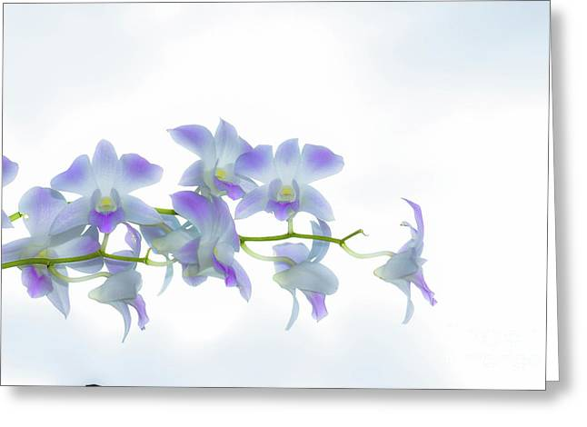 Orchids Infront Of Clouds  Greeting Card by Ofer Cohen