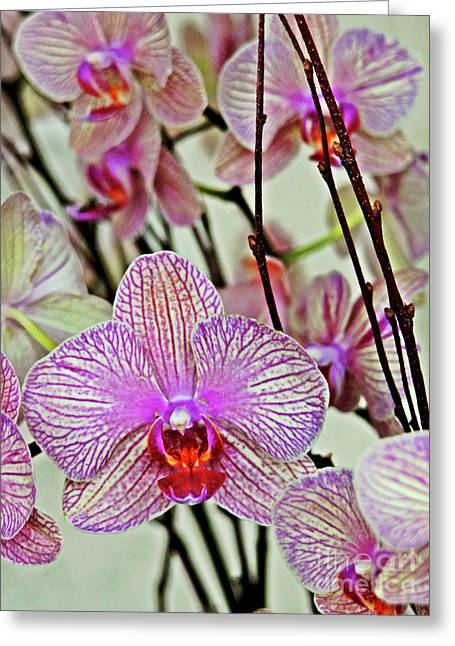 Orchids Greeting Card by Maria Arango