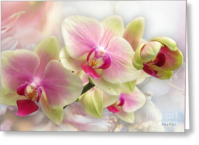 Orchids Greeting Card by Morag Bates