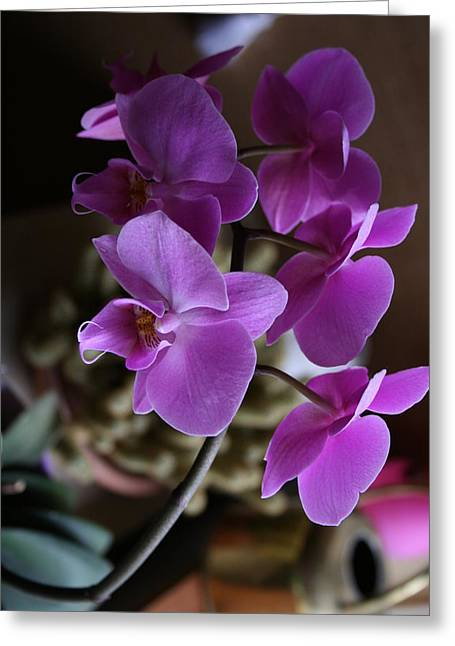 Orchid's  Mystery  Greeting Card