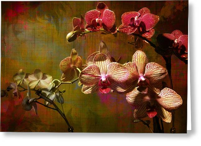 Orchids On Silk Greeting Card