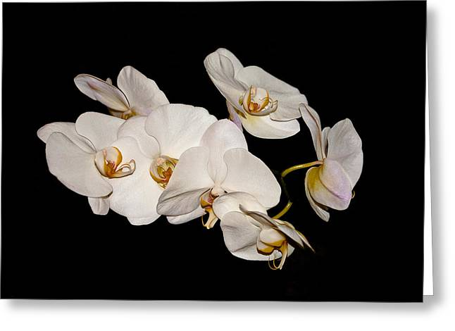 Orchids Greeting Card by Pat Carosone