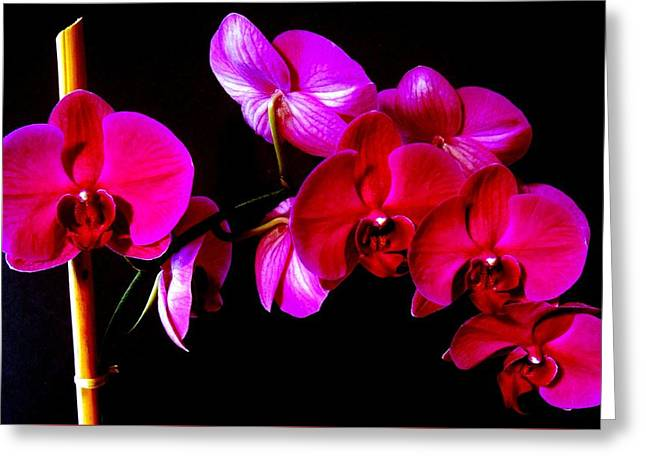 Orchids Greeting Card by Ron Davidson