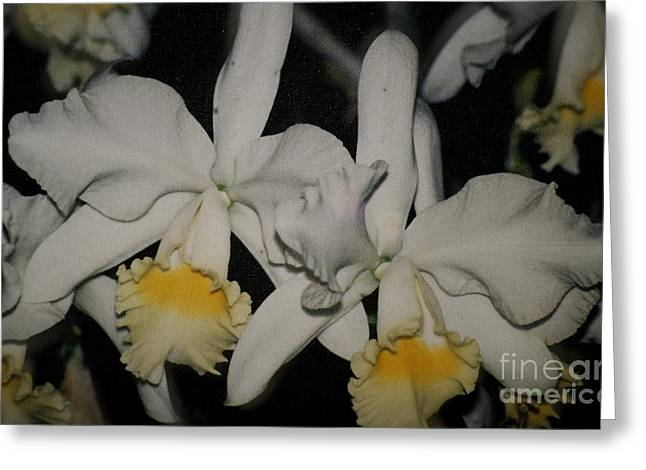 Orchids Satin Greeting Card by The Art of Alice Terrill