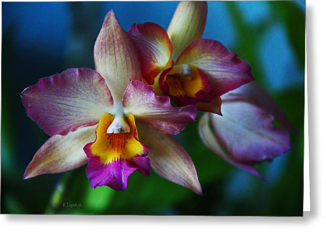 Orchids - Trio Greeting Card by Kerri Ligatich