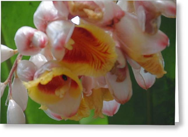 Orchids Greeting Card by Ursula Wright