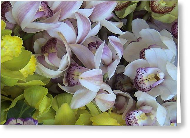 Orchids Greeting Card by William Thomas