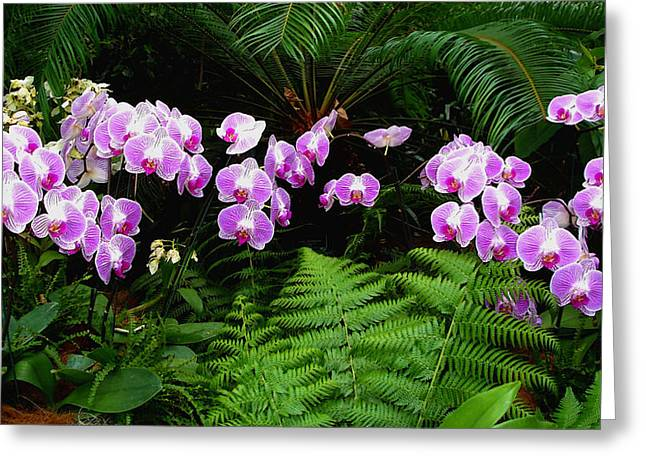 Greeting Card featuring the photograph Orchids With Fern-panoramic by Margie Avellino
