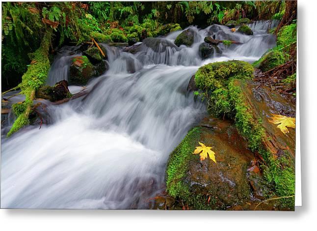 Greeting Card featuring the photograph Oregon Cascade by Jonathan Davison