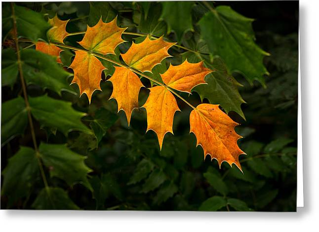 Oregon Grape Autumn Greeting Card by Mary Jo Allen