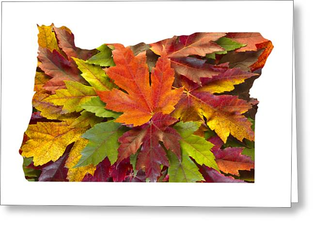 Oregon Maple Leaves Mixed Fall Colors Background Greeting Card