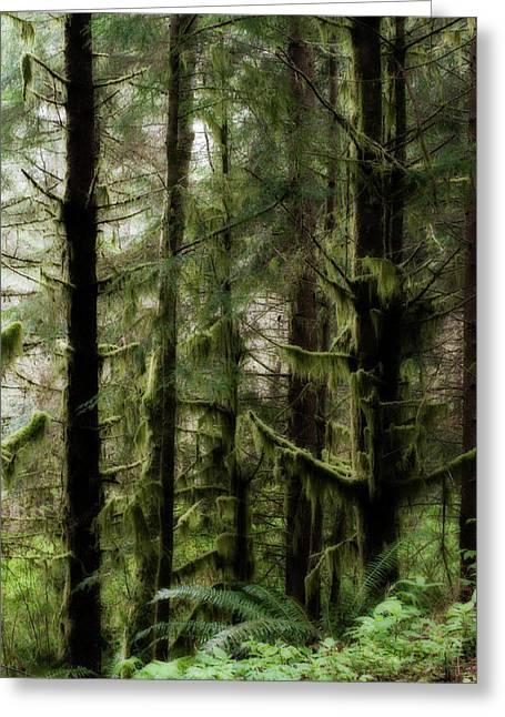 Oregon Old Growth Coastal Forest Greeting Card
