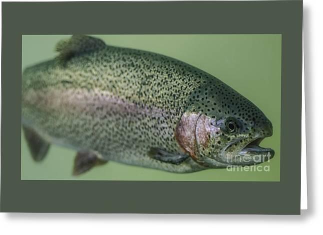 Oregon Rainbow Steelhead Trout Greeting Card by Nick Boren