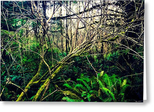 Oregon Rainforest II Greeting Card