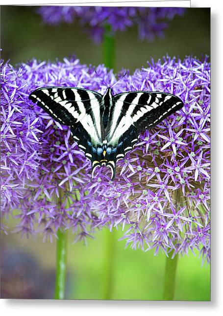 Greeting Card featuring the photograph Oregon Swallowtail by Bonnie Bruno
