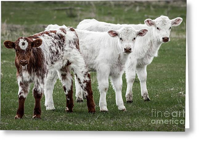Greeting Card featuring the photograph Oreo And The Twins by Brad Allen Fine Art
