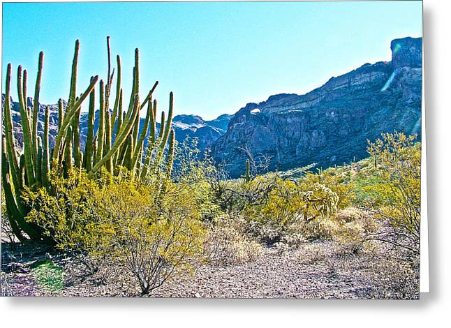 Organ Pipe Cactus In Arch Canyon In Organ Pipe Cactus National Monument-arizona  Greeting Card by Ruth Hager