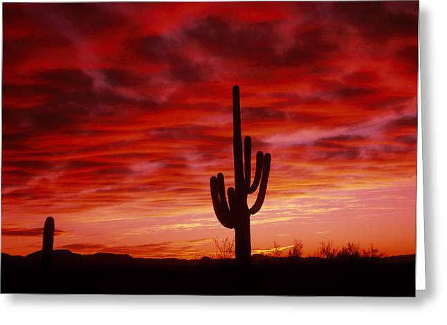 Organ Pipe Cactus State Park Az Usa Greeting Card by Panoramic Images