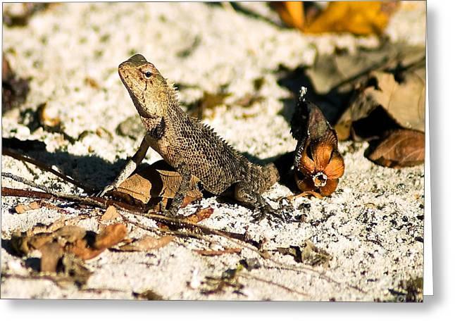Oriental Garden Lizard A Dragon In The Maldives Greeting Card by Chris Smith