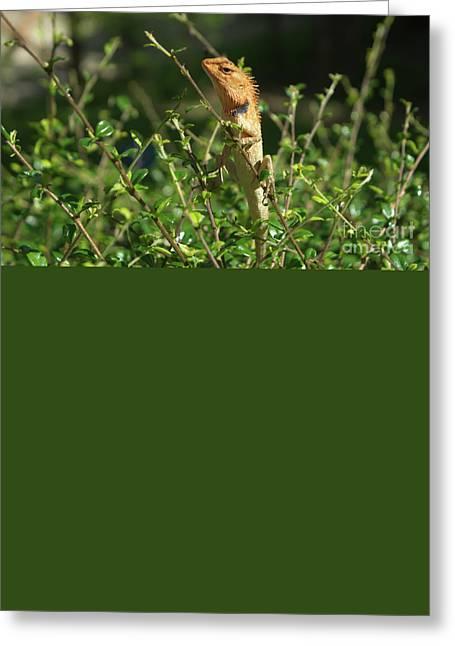 Posing Oriental Garden Lizard Greeting Card by Michelle Meenawong