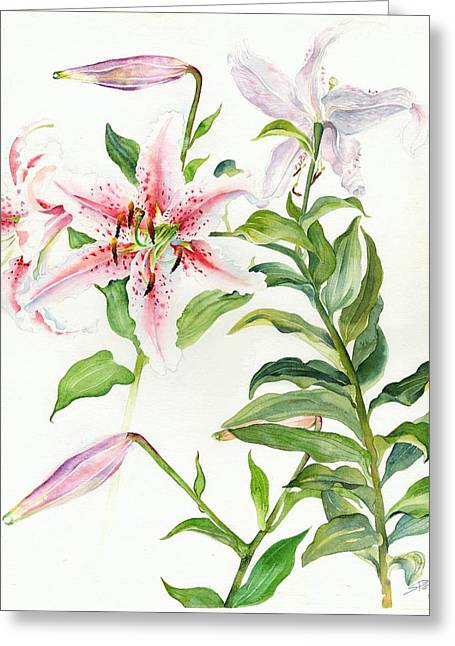 Oriental Lily Mona Lisa Liliaceae Greeting Card by Sandra Phryce-Jones