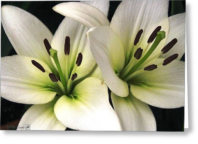 Oriental Lily Named Endless Love Greeting Card by J McCombie
