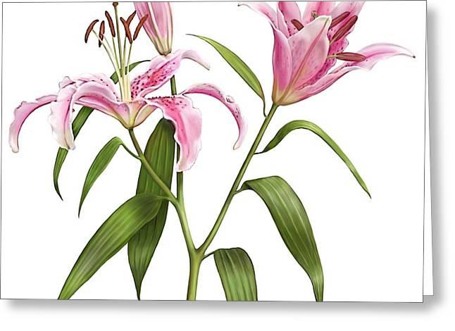 Oriental Lily Stargazer Greeting Card