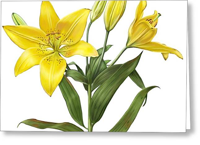 Oriental Lily Yellow Greeting Card