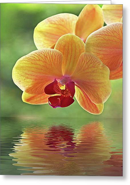 Oriental Orchid Spa Greeting Card by Gill Billington