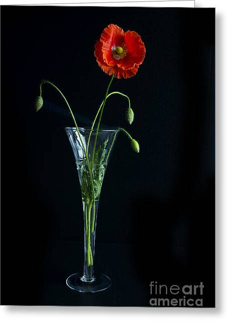 Oriental Poppy Greeting Card by Elena Nosyreva