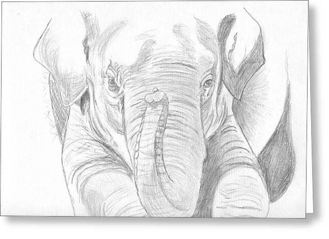 Original Pencil Sketch Elephant Greeting Card by Shannon Ivins
