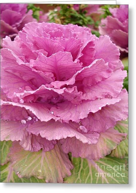 Ornamental Cabbage Greeting Card by Carol Groenen