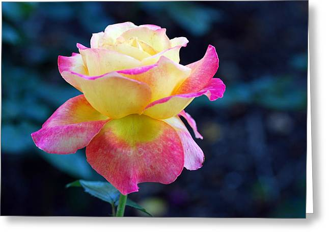 Ornamental Greeting Card by Don  Wright